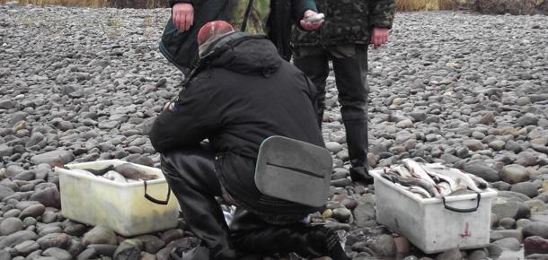 На территории национального парка «Югыд ва» проводится месячник по охране осенне-нерестующих рыб