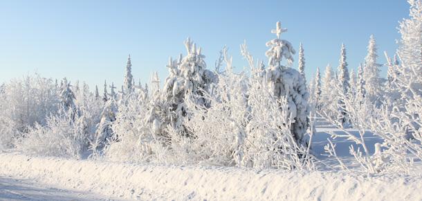 В Республике Коми и в Печоре слегка потеплеет