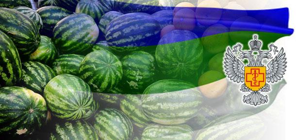 Управление Роспотребнадзора по Республике Коми обращает внимание потребителей на требования, предъявляемые к продаже бахчевых культур