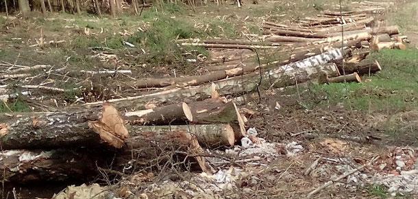 Печорская природоохранная межрайонная прокуратура провела проверку соблюдения законодательства об охране окружающей среды